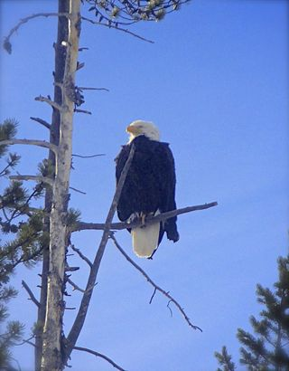 Eagle Idaho