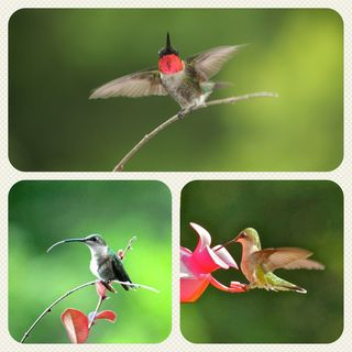 Hummers Collage